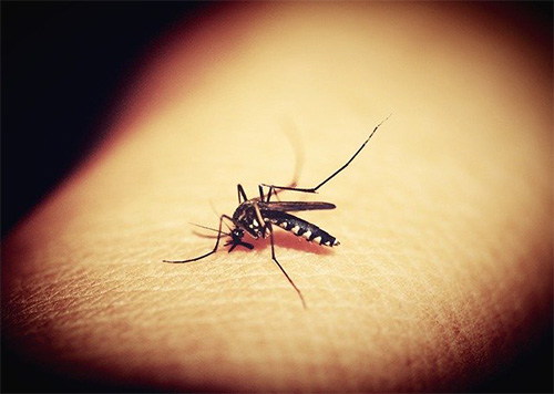 Close up shot of a mosquito on skin
